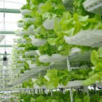 Is Vertical Farming the Future of Our Food Supply?